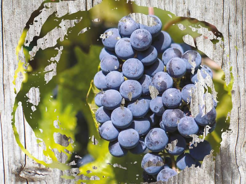 vinopis paralelna vinska stvarnost vinski magazin vino fino